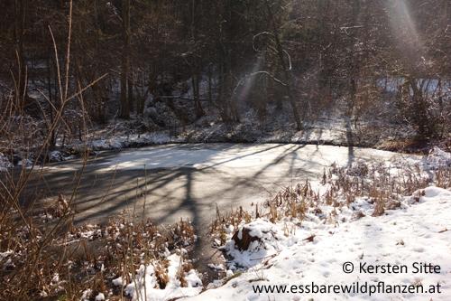 Winterstimmung_3 500px © Kersten Sitte, www.essbarewildpflanzen.at