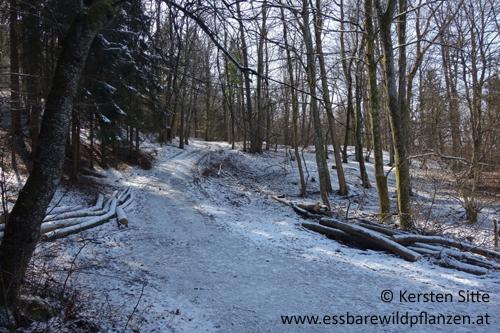Winterstimmung_4 500px © Kersten Sitte, www.essbarewildpflanzen.at