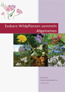 2d newsletter e-book nov 2016 © Kersten Sitte, www.essbarewildpflanzen.at