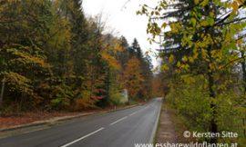 Herbstimpressionen vom Attersee