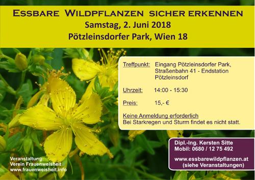 Essbare Wildpflanzen Bestimmung, Wien am 2.6.2018 © Kersten Sitte, www.essbarewildpflanzen.at
