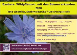 Essbare Wildpflanzen am 18.09.2020 mit den Sinnen erkunden