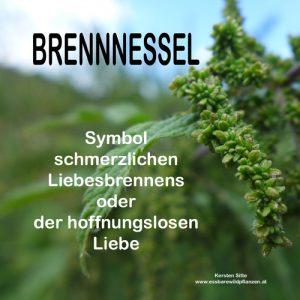 zitate brennnessel samen 1 © Kersten Sitte, www.essbarewildpflanzen.at