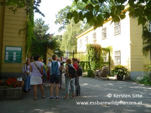 Essbare Wildpflanzen bestimmen am 03. September 2016, Wien