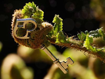 Bestimmungsschlüssel, Bild von Susanne Jutzeler, suju-foto by pixabay © Kersten Sitte, www.essbarewildpflanzen.at