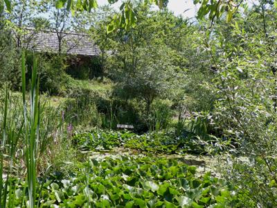 Garten © Kersten Sitte, www.essbarewildpflanzen.at