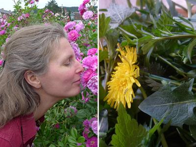 Geruch, Geschmack © Kersten Sitte, www.essbarewildpflanzen.at