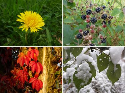 Jahreszeiten © Kersten Sitte, www.essbarewildpflanzen.at