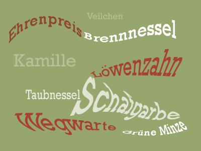 Pflanzennamen © Kersten Sitte, www.essbarewildpflanzen.at