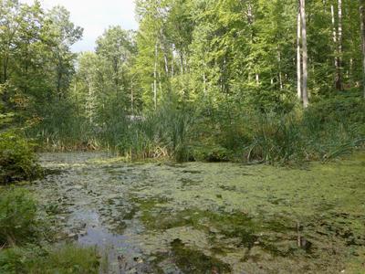 Standorte © Kersten Sitte, www.essbarewildpflanzen.at