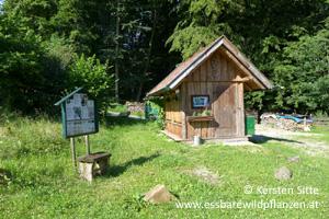 steinleitn alm bienen © Kersten Sitte, www.essbarewildpflanzen.at