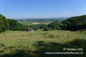 steinleitn alm hochrinder © Kersten Sitte, www.essbarewildpflanzen.at