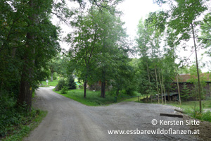 steinleitn alm parken 1 © Kersten Sitte, www.essbarewildpflanzen.at