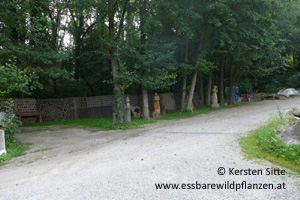 steinleitn alm parken 3 © Kersten Sitte, www.essbarewildpflanzen.at