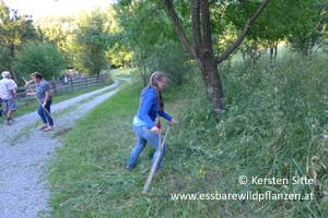 steinleitn alm sensen 2 © Kersten Sitte, www.essbarewildpflanzen.at