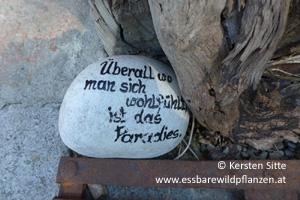 steinleitn alm stein © Kersten Sitte, www.essbarewildpflanzen.at
