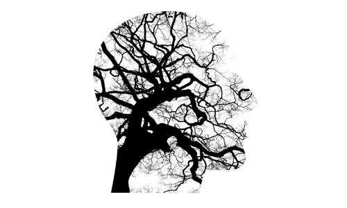 Gehirn-Baum, Bild von Tumisu auf Pixabay, 500px_Kersten Sitte, www.essbarewildpflanzen.at
