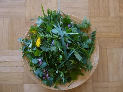 Ernte © Kersten Sitte, www.essbarewildpflanzen.at