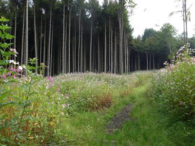 Florenwandel © Kersten Sitte, www.essbarewildpflanzen.at