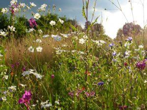 Naturschutz, Bild von silviarita by pixabay © Kersten Sitte, www.essbarewildpflanzen.at